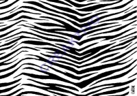 Motiv-Fotokarton 300g/qm 50x70cm Zebra
