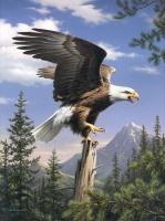 Malen nach Zahlen - Schreiender Adler
