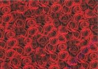 Motiv-Fotokarton 300g/qm 49,5x68cm Rosen
