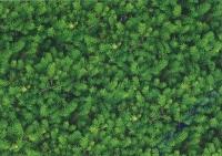 Motiv-Fotokarton 300g/qm 49,5x68cm Tannengrün