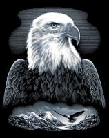 Gravurfolie silber Adler
