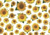 Transparentpapier Sonnenblumen 50x70cm (Auslaufartikel)