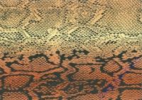 Motiv-Fotokarton 300g/qm 49,5x68cm Schlange