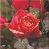 Tissue Servietten 33 x 33 cm Rose (Restbestand)