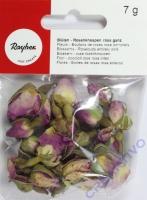 Blüten - Rosenknospen rosa