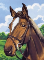 Malen nach Zahlen Junior - Pferdeportrait