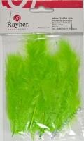 Deko-Federn 8cm 10 Stück hellgrün