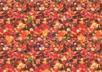 Motiv-Fotokarton 300g/qm 49,5x68cm Herbstlaub (Restbestand)